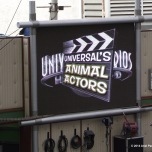 Animal Actors show!