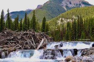 Nihahi Creek