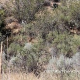 Osoyoos Desert Centre - See the deer?!?!