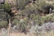 Osoyoos Desert Centre - See the deer?!?!