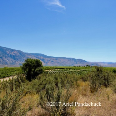 Osoyoos Desert Centre - It's cool to see the vineyards and the desert meet!