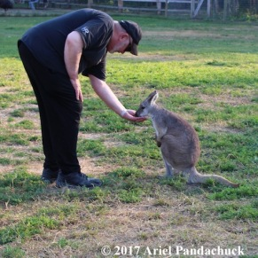 Kangaroo Creek Farm -My pappy feeding a wallaby