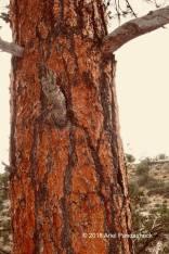 I liked this tree